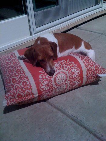 Lazy Maddie Pic