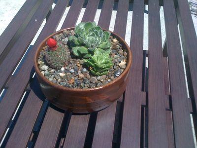 Wooden Pot B - July Blog